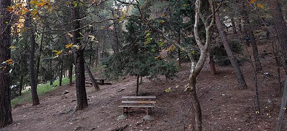 Τα δάση της Αττικής που θα σε φέρουν κοντά στη φύση