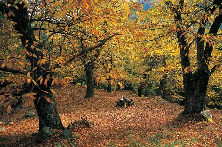 Τα 4+1 χωριουδάκια που σας υπόσχονται τις πιο συναρπαστικές φθινοπωρινές εξορμήσεις!